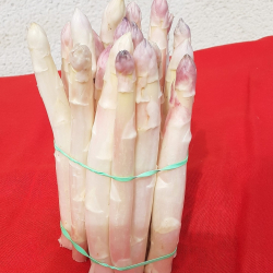 asperges-blanches
